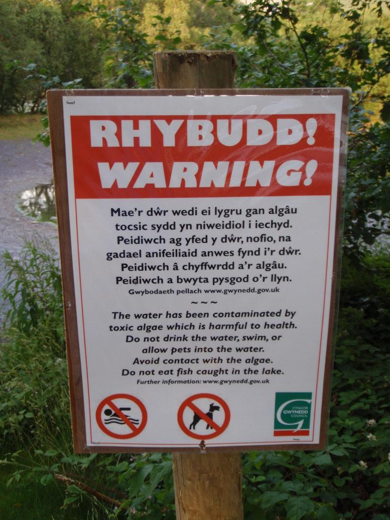 Warning sign of toxic algae pollution