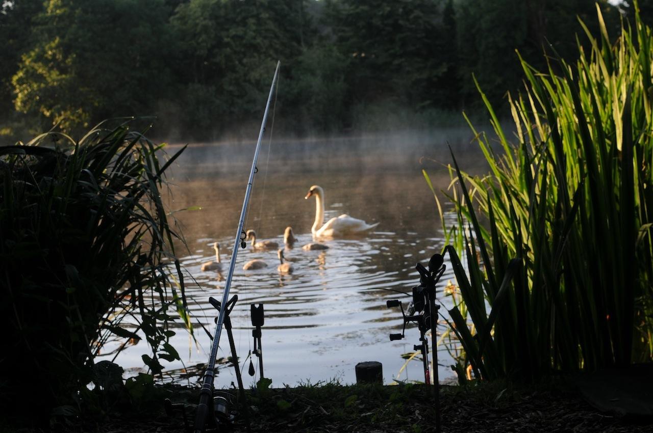 Fishing at Dusk, credit Angling Dreams