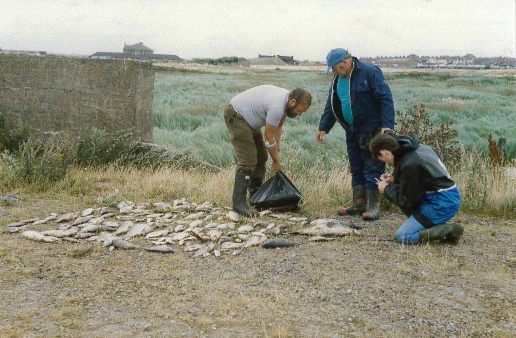 River fleet fish kill 1991